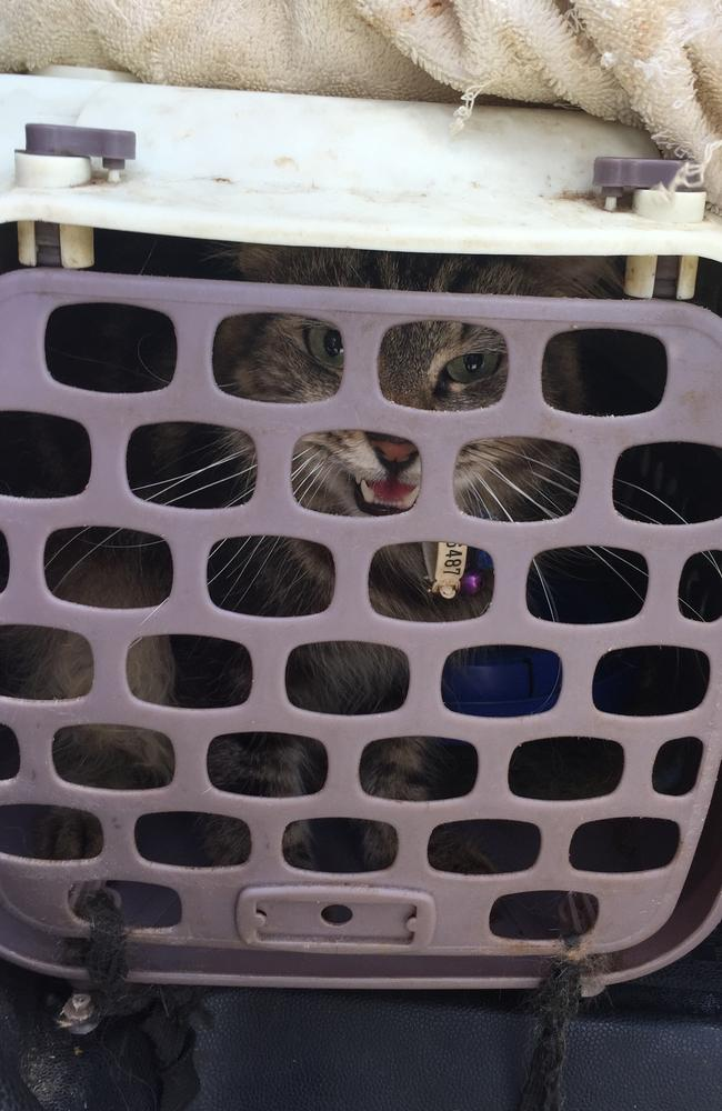 Bear was kept in a carrier and let out for one hour every other day. PHOTO: SUPPLIED RSPCA