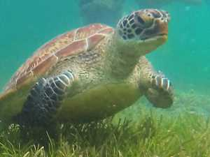 Two men charged with killing a turtle off Seaforth