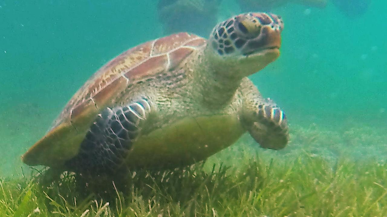 Two men are accused of killing a turtle off Seaforth. Picture: Brendan Radke.