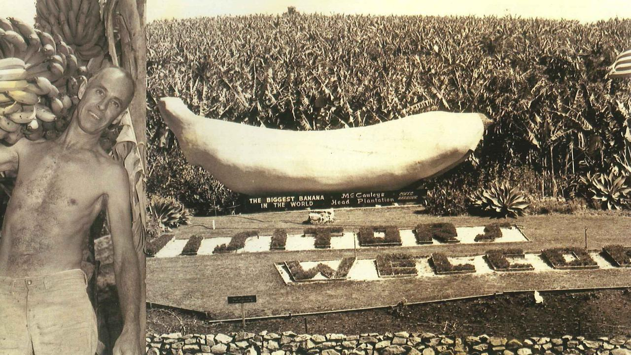 Coffs Harbour's Big Banana has been a tourist drawcard since it first opened in 1964.