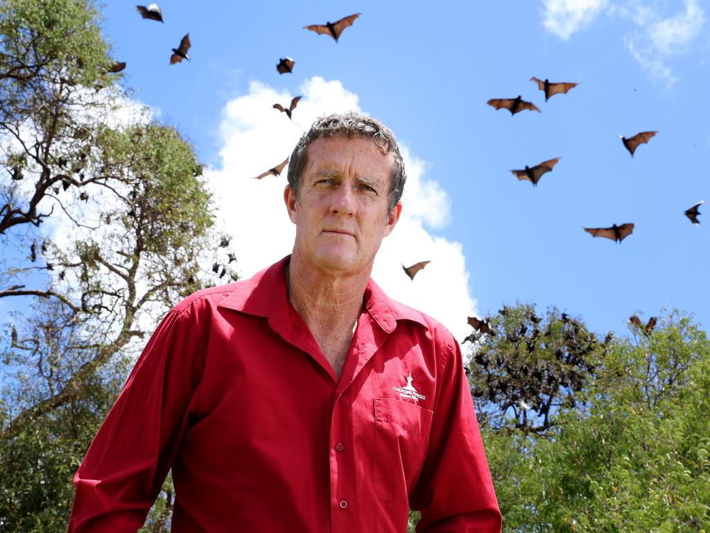 Charters Towers Mayor Frank Beveridge with the large bat colony roosting in Lissner Park. Photographer: Liam Kidston