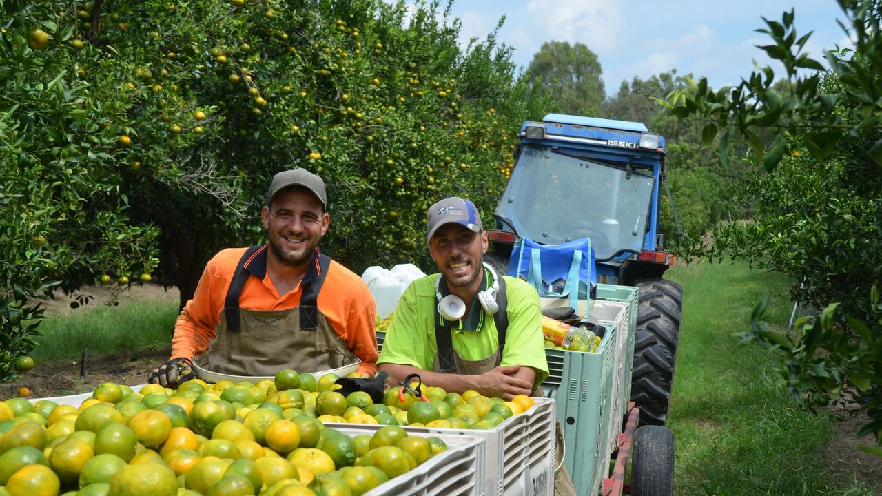 JOBSEEKERS and school graduates have been recommended to move to regional areas to on farm work usually done by backpackers, but some are sceptical whether the idea could bear fruit. Picture: Felicity Ripper