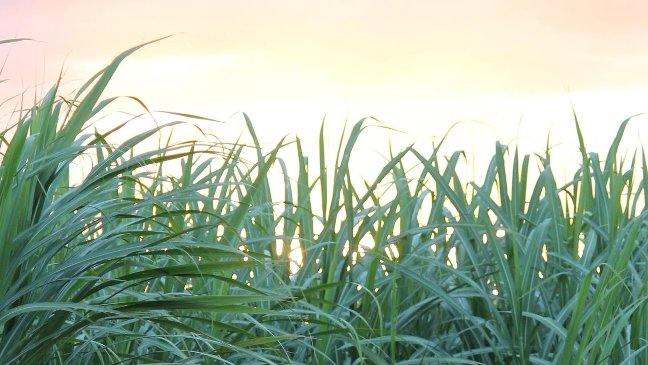 The sugarcane industry is important to the Mackay region. Picture: Kirili Lamb