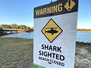 Beaches reopen after shark sightings yesterday