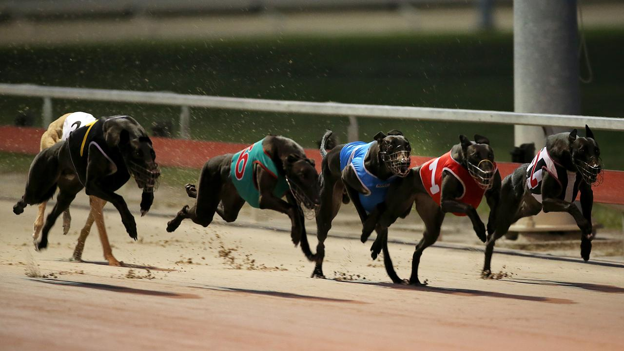 Greyhound racing at the Ipswich track.