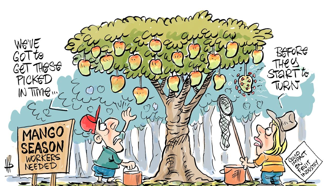 Harry Bruce's take on the upcoming mango season. Today's Harry Bruce cartoon has been brought to you by Dawson MP George Christensen. George is a proud supporter of free speech and the ability of our cartoonists to take the mickey out of the political class.
