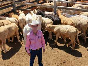 Over 3600 cattle sold at Roma Saleyards