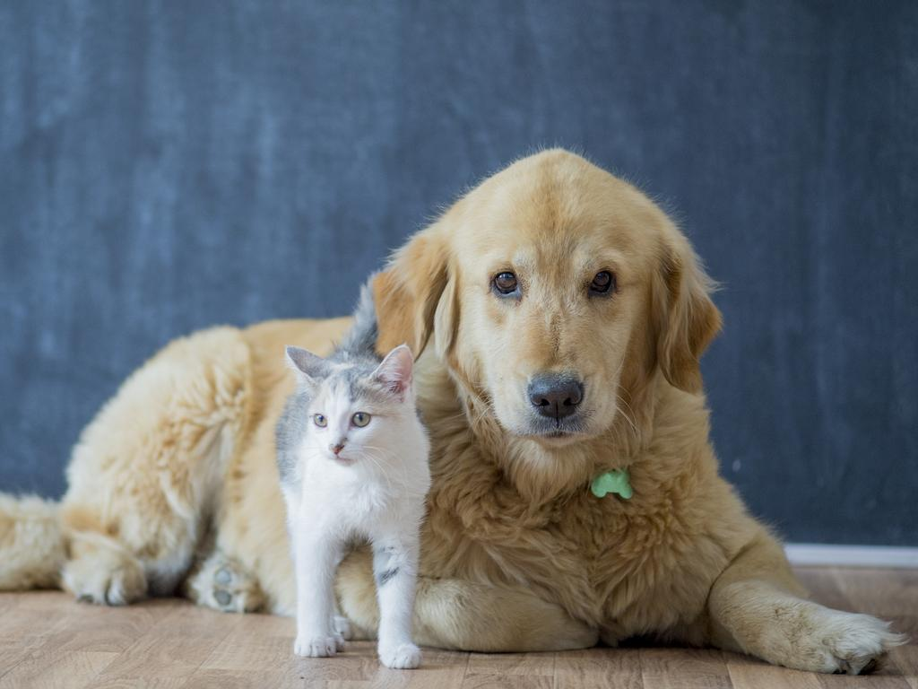What to feed your pets is a constant source of concern for readers. Picture: iStock