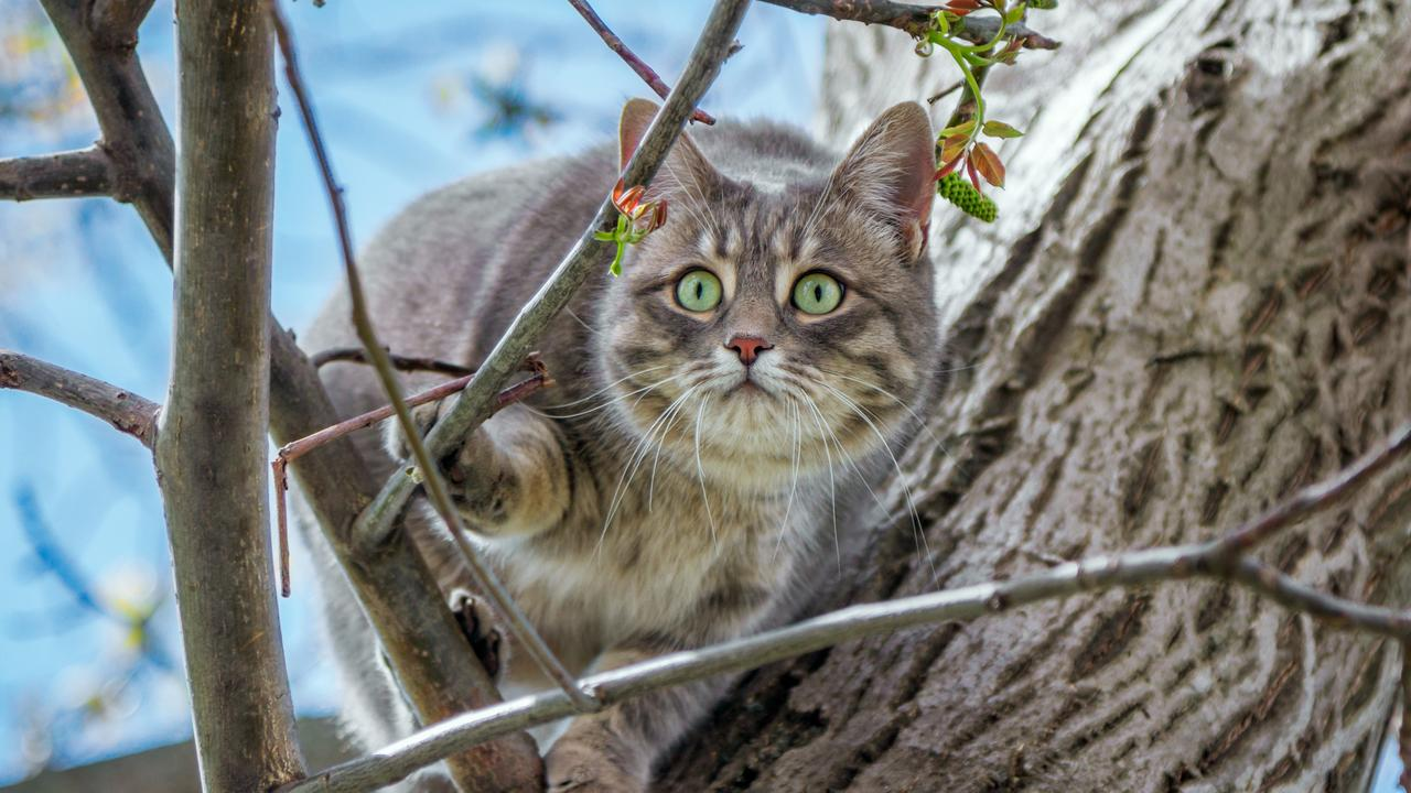 Our pets are domesticated and have evolved alongside us, negating the need to hunt for their food. Picture: iStock