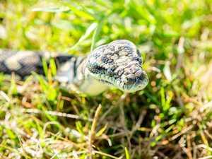 Teenage boy rushed to hospital after snake bite