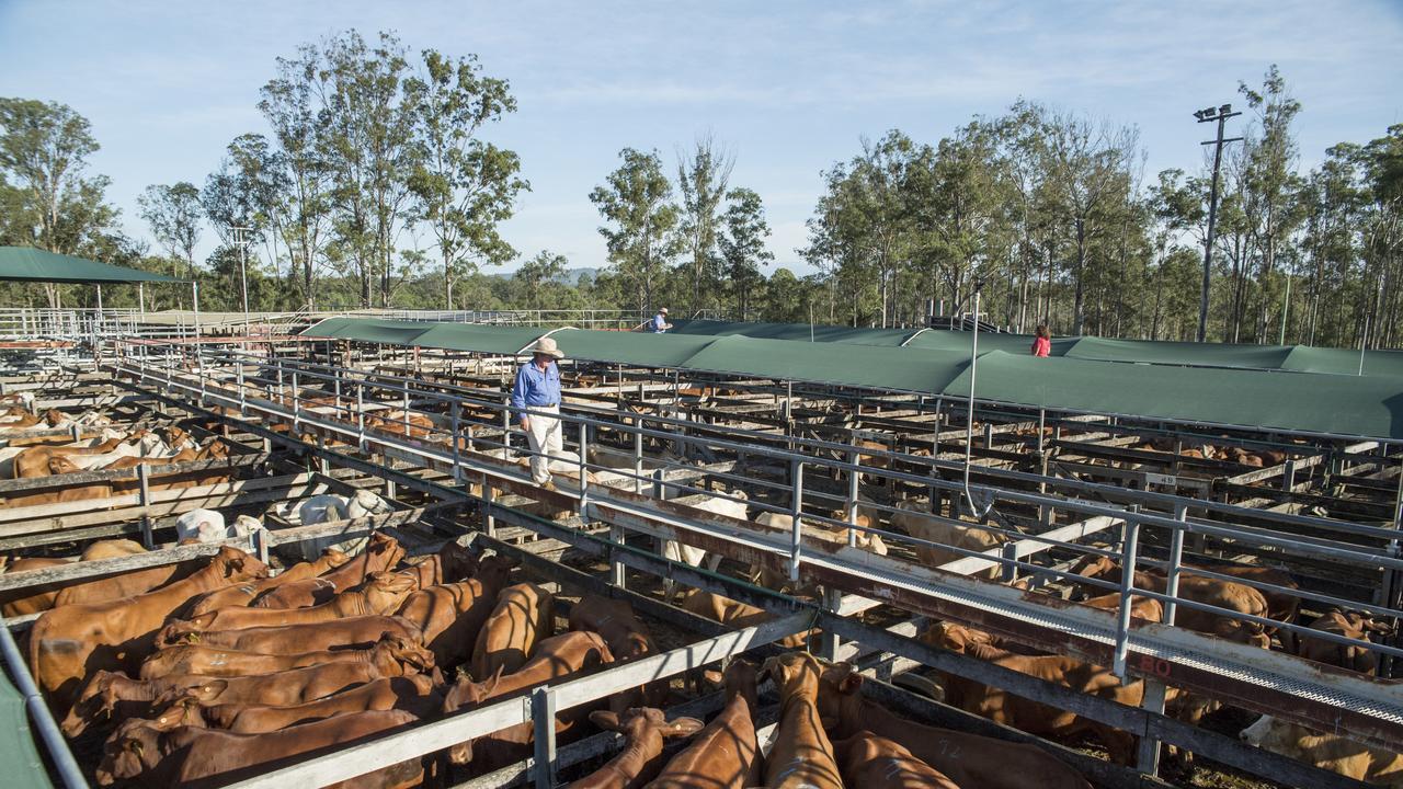 Sullivan's Livestock Sale in Gympie