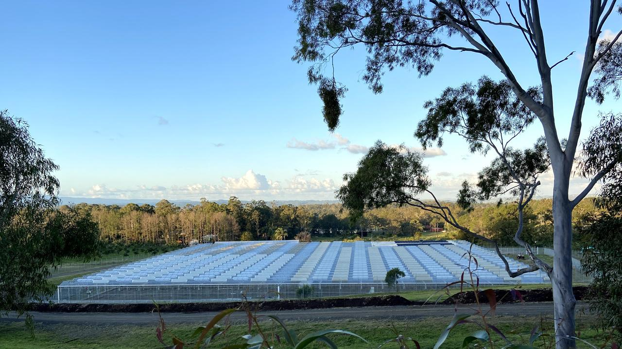 The CannaPacific production facility near Lismore includes a 10,000 sqm Dutch glasshouse and high-security outdoor cultivation area.
