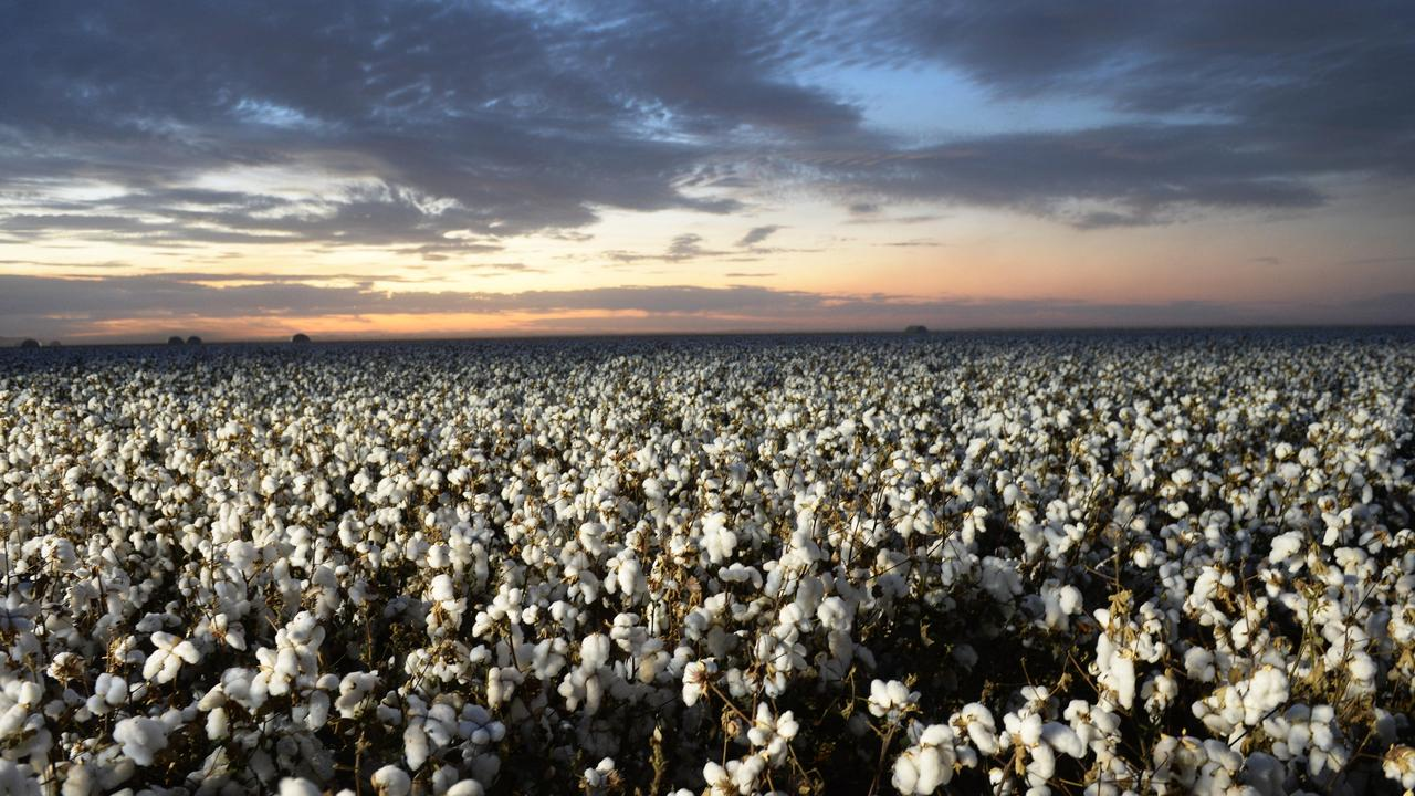 Australian cotton is the latest industry to feel the wrath of growing trade tensions with China.
