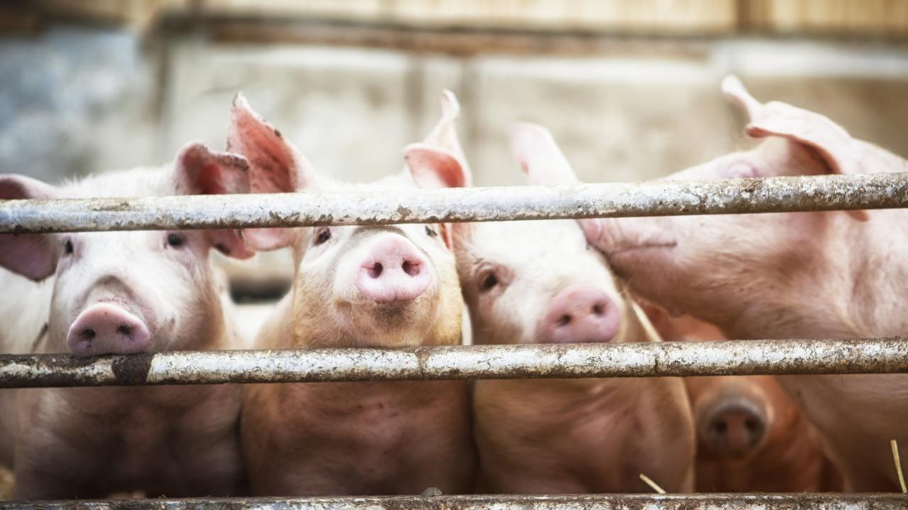 Antibiotics used in factory farming are breeding antibiotics infections. Picture: istock