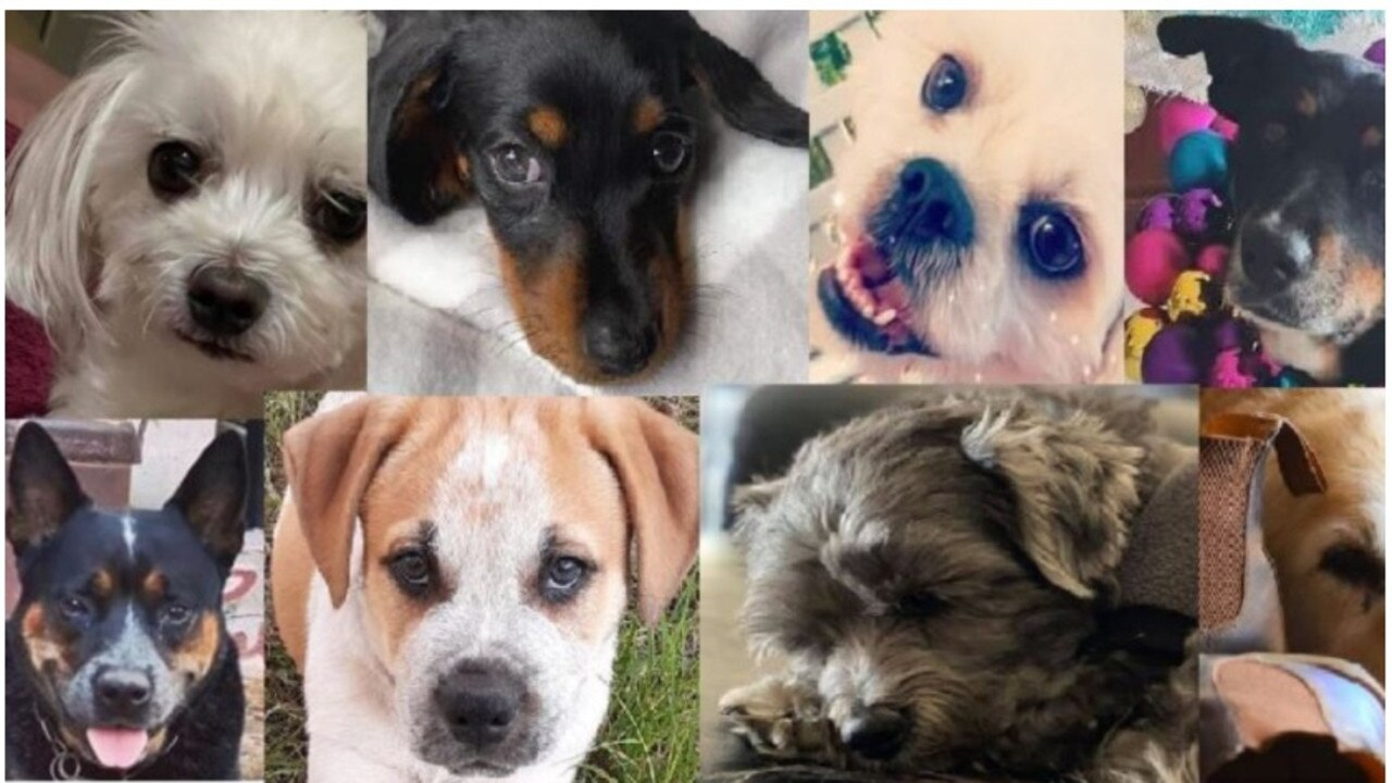 The cost of maintaining services for the Gympie region's more than 7000 dogs has forced the council to introduce an annual fee which dog owners have been not to happy about.