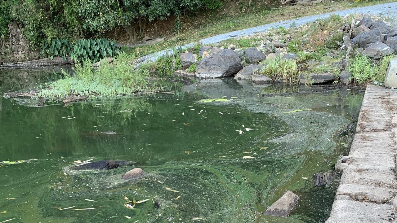 Blue green algae at Bray Park Weir last week.
