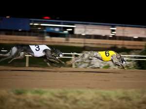 Northern Rivers greyhound track branded 'second deadliest'
