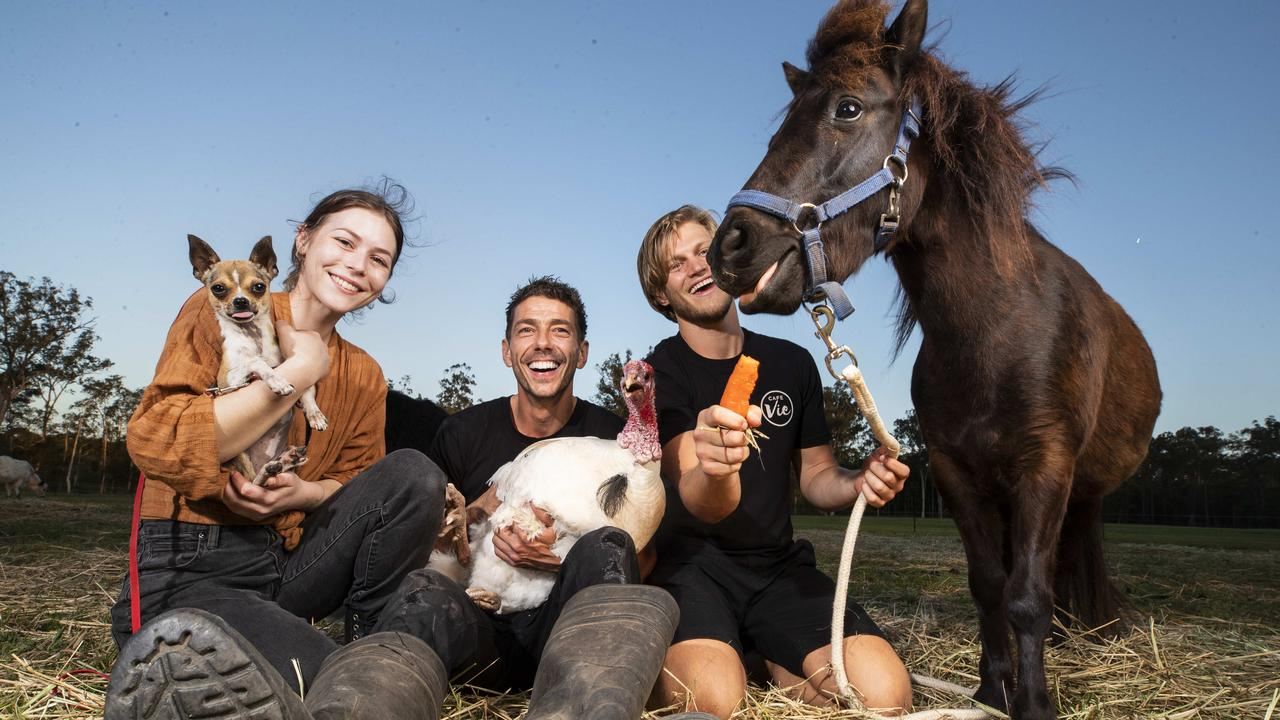 Cafe Vie workers Lucy Coyle, Christian Collen and Jarvis Rich spend some time with Willow the Chihuahua, Percy the white turkey and Rambles the pony at Mini Tails Animal Sanctuary in the Glasshouse Mountains. Photo: Lachie Millard