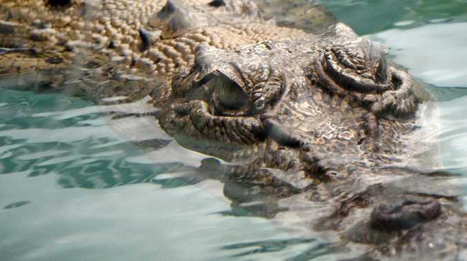Fisherman catches crocodile, takes it home