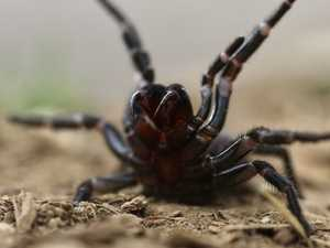 Killer spiders are about to unleash
