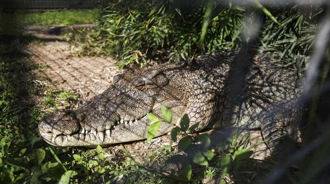 OH SNAP: Man takes 1.7m croc from Peter Faust Dam home
