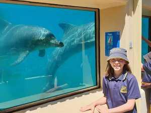 South Grafton Public Dolphin Marine Magic visit