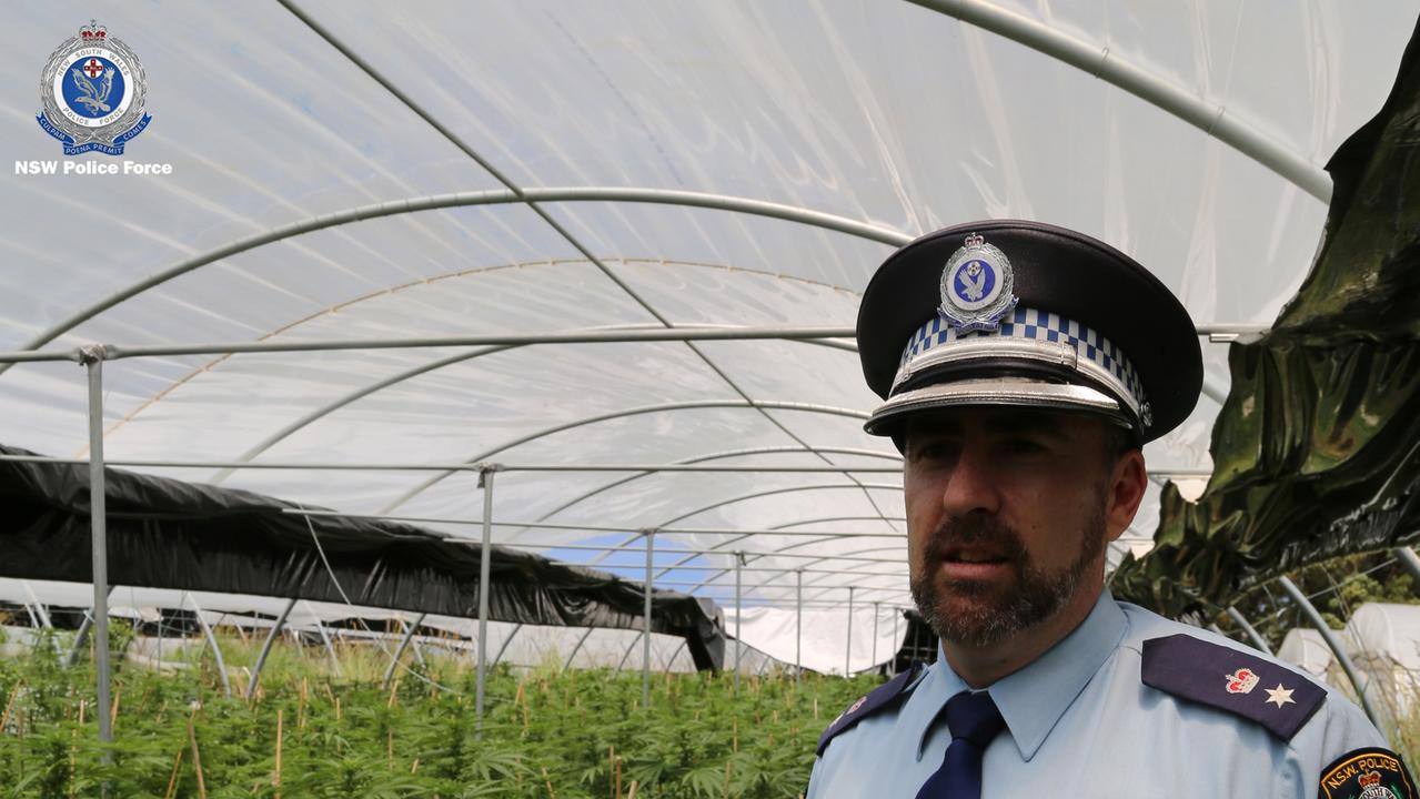 Police uncovered the plants at three properties on the mid north coast. Picture: NSW Police via NCA NewsWire