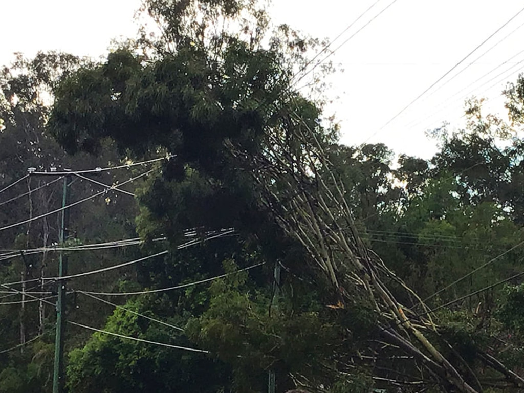 Trees on fallen powerlines. Photo: Energex