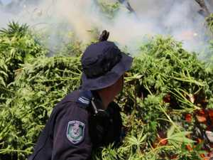 Cannabis bust 'one of largest' in history