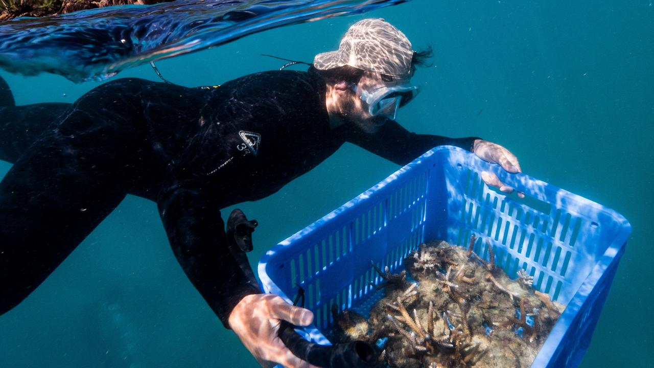 The reef restoration project could provide 24 ongoing jobs. Picture: GrumpyTurtle Creative