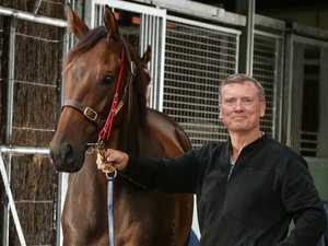 Alligator Blood feat a big thrill ahead of golden race