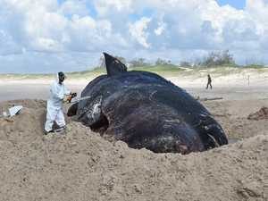 Why theft of sperm whale's jaw was not investigated