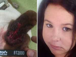 Sick dog's rotting ears left bleeding and swollen