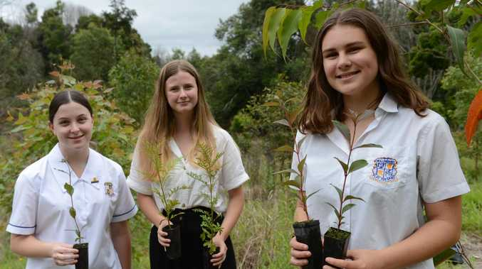 Students plant hundreds of koala trees to inspire others