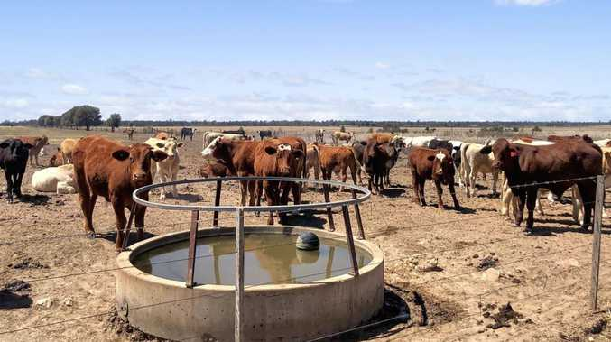 7000+ acre grazing opportunity to auction near Dalby