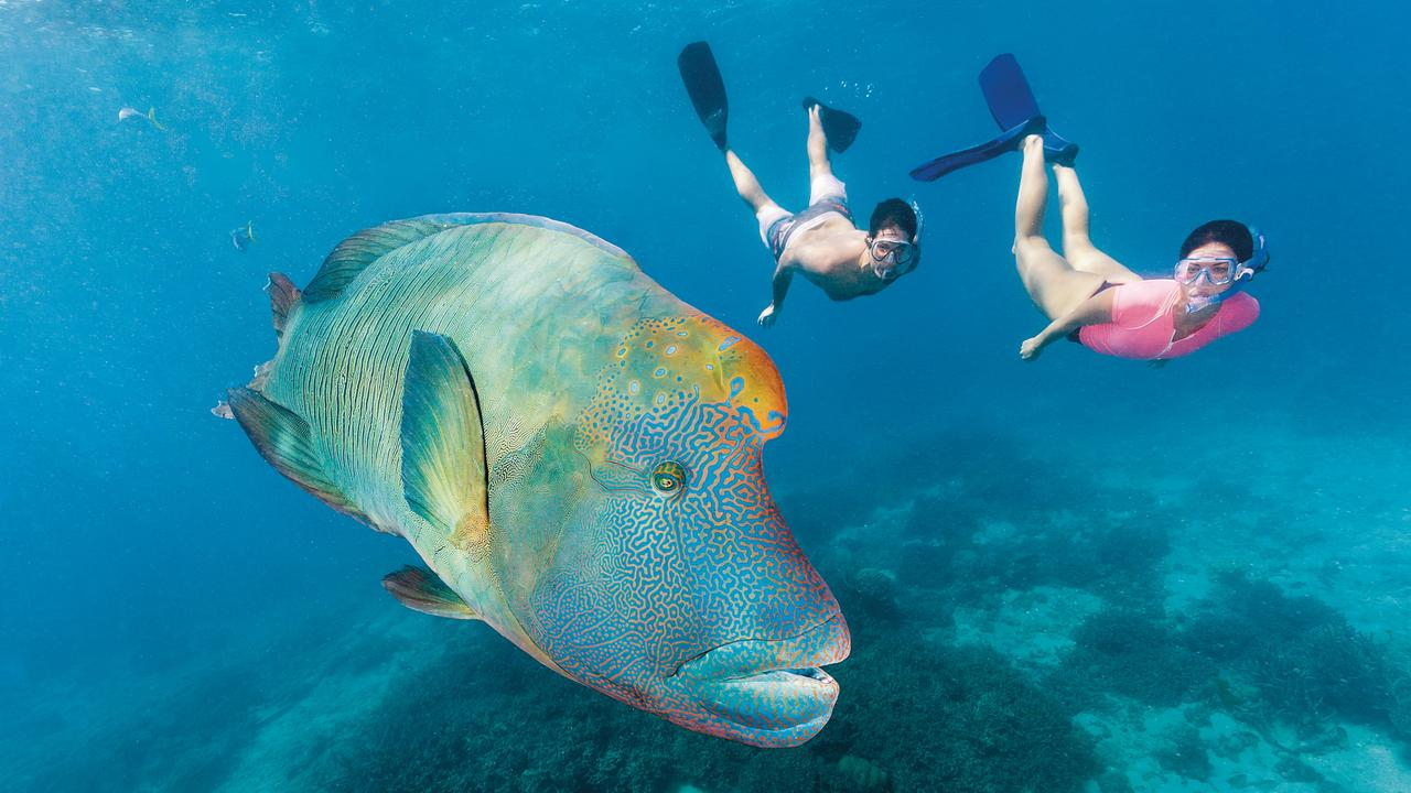 Protecting the Great Barrier Reef is a serious issue. Photo: Andrew Watson