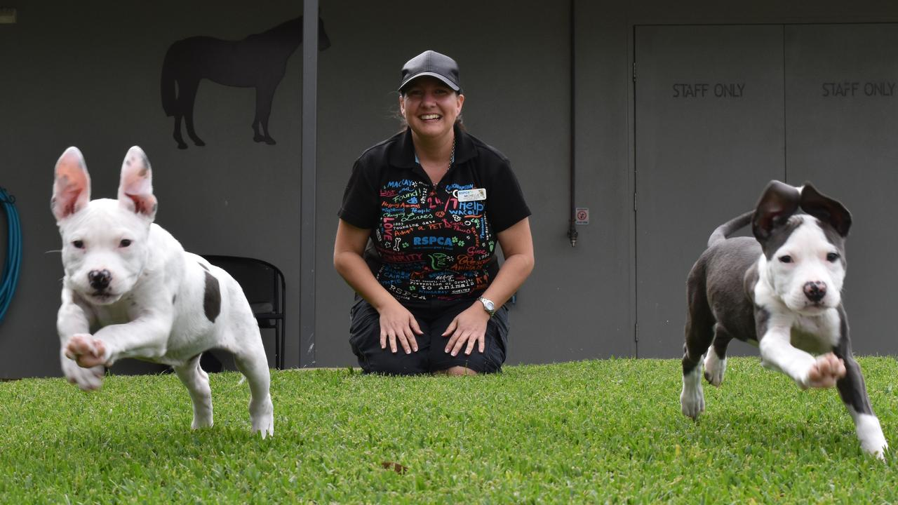 Mayor Greg Williamson said the council was forced to rely heavily on the Mackay RSPCA Adoption Centre and other animal welfare groups.