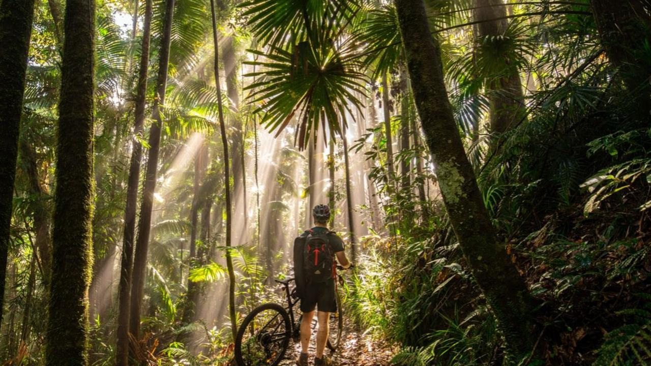 Mountainbiker in Eungella by Mick Vivian. Picture: supplied