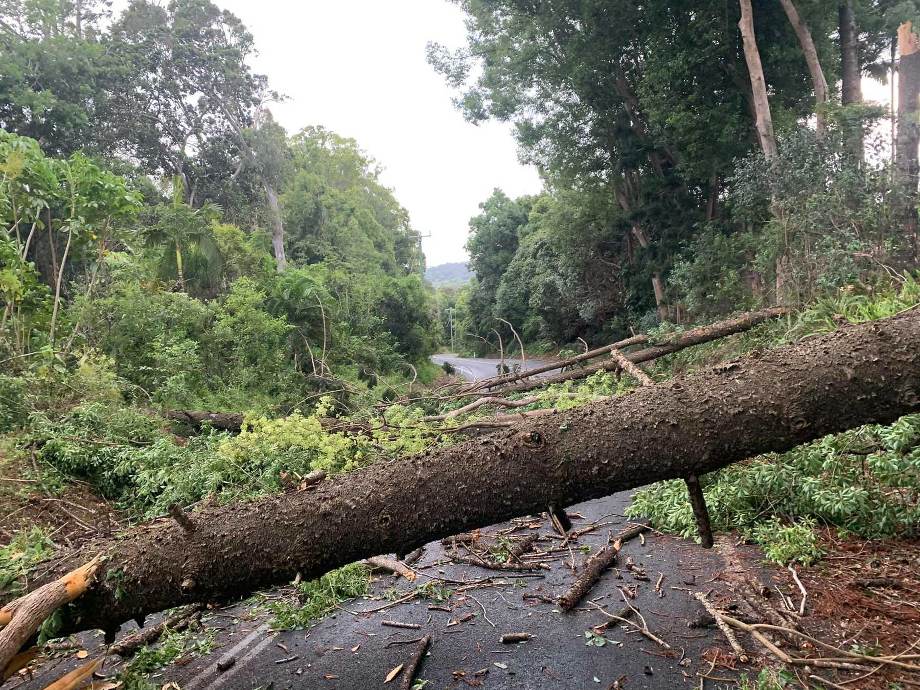 In the Tweed, a large tree fell down on Bilambil Rd in Banora Point bringing with it about 500m of power lines about 4.10pm.