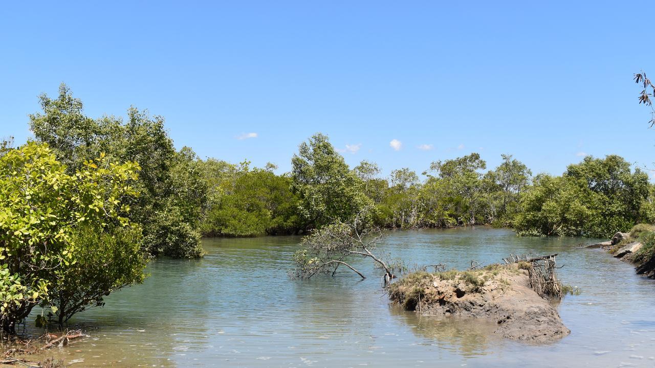 The thick mangroves in McCreadys Ck near where a catamaran was burned. Picture: Heidi Petith
