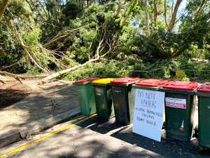 IN PICTURES: Trees down, trampoline into powerline