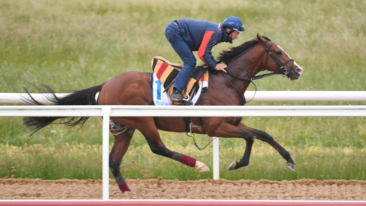 Anthony Van Dyck, pictured being ridden by Hugh Bowman during trackwork at Werribee Racecourse, features regularly among the top four choices of our local tipsters. (Pat Scala/Racing Photos via Getty Images)