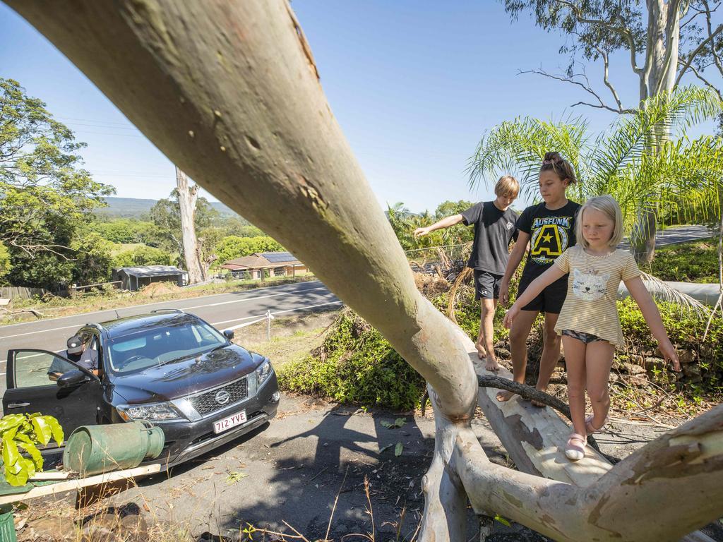 Siblings Tao 6, Zion 13, and Shekinah Johansen 10, balance on a giant fallen gum tree at their property at Ninderry. Photo Lachie Millard