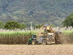 Sugar mill crushes less than expected because of wet weather