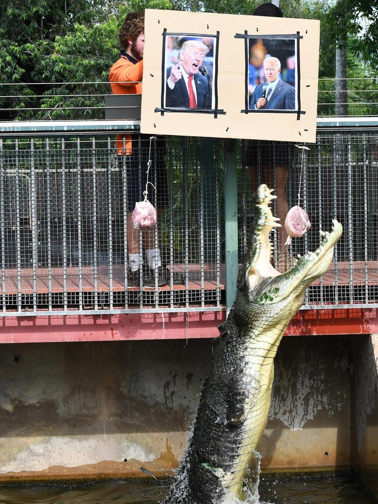 Muscles the Magic Croc at Crocodylus Park chooses Joe Biden as the winner of the US election. Picture: KATRINA BRIDGEFORD.