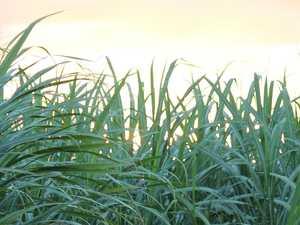 Sugar hit: Mackay leaders allay China fears