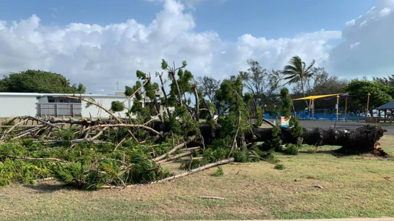 Sarina Beach resident Gaynor Jenkins heard the crunch as the last Norfolk Pine toppled down at Sarina Beach on Tuesday November 3. Picture: Sandpiper Motel