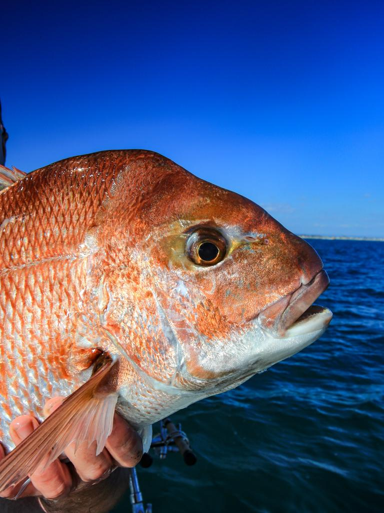 Youhe Wu admitted having a stash of undersized fish including snapper.