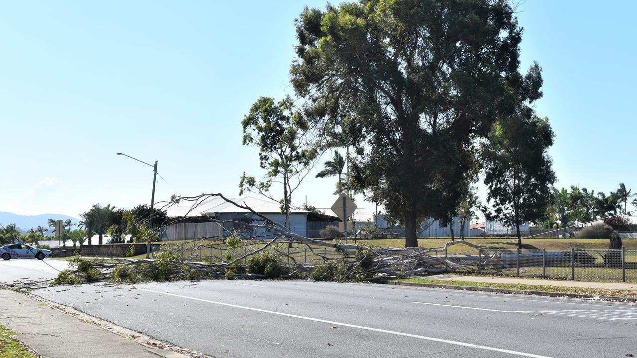 The gum tree which took out a power line and landed on the fence at Andergrove State School. Picture: Heidi Petith