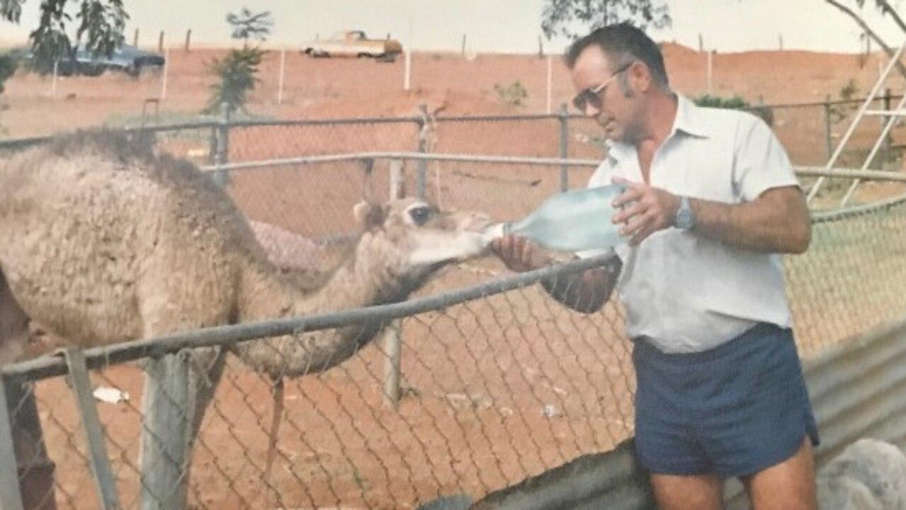 Tiger Slater feeding a camel at Boulia.